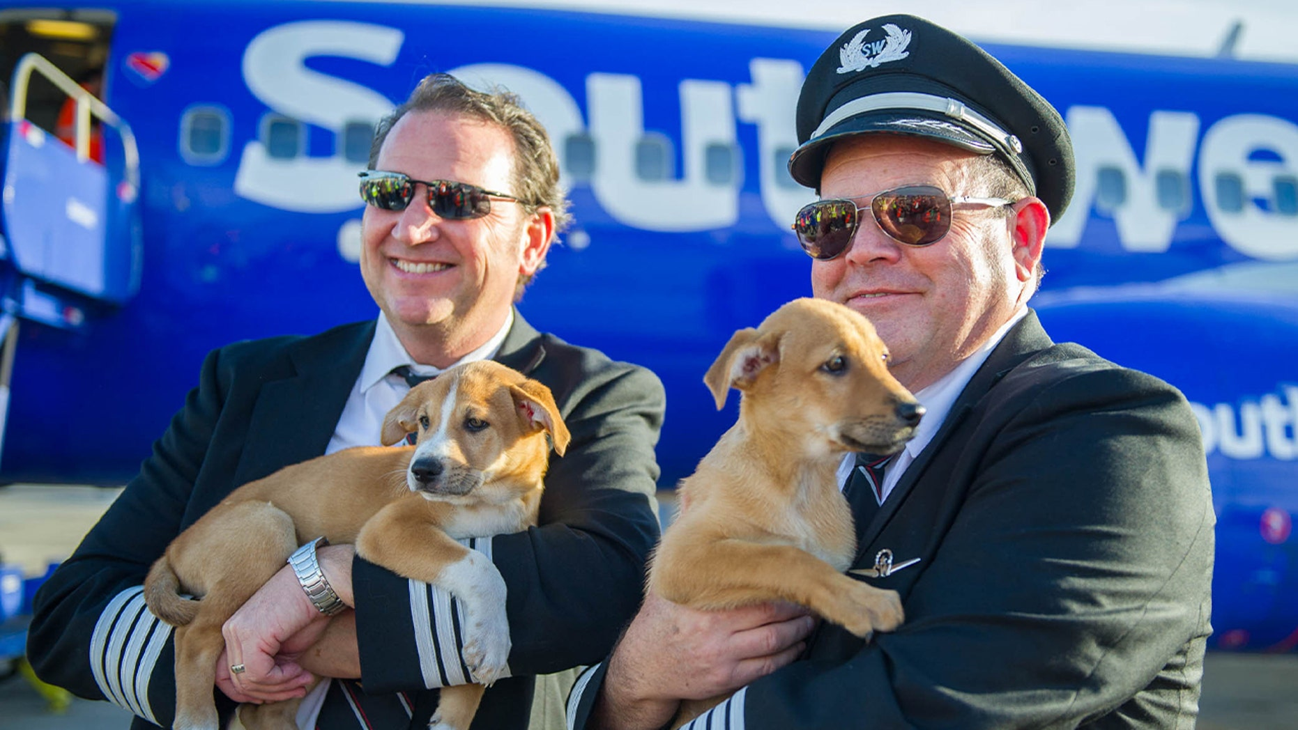 Southwest Airlines Flies 62 Dogs And Cats Out Of Puerto Rico For