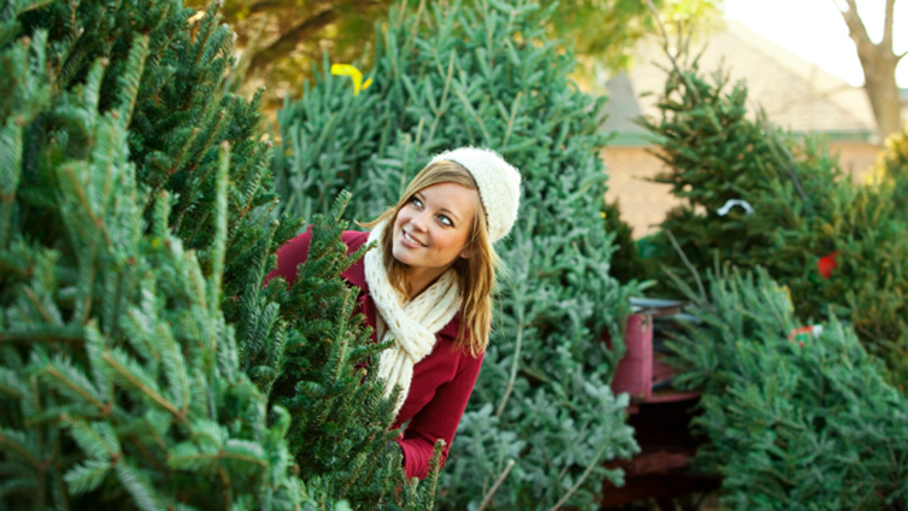 Tips for Choosing the Right Christmas Tree | Fox News