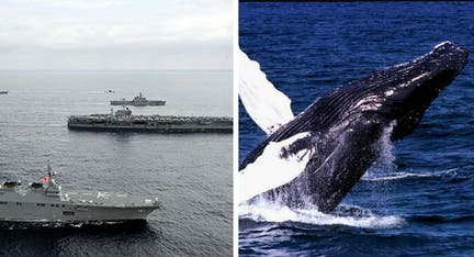 Environmentalists fire legal volley at Navy over war games