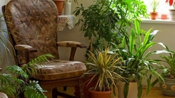 Believe it or not, there are  common houseplants that can actually help rid the air in your home of toxins?