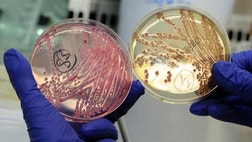 When most think of E. coli, they think of food poisoning, but what if the bacteria could be the key to fighting antibiotic resistance?