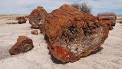 An abundance of ancient, crystallized logs and wood fragments give the Petrified Forest its name, but it's a name that doesn't tell the whole story. What you'll discover here is a diverse and extensive landscape of curiously shaped badlands, vast high-desert mesas, and windswept grasslands.