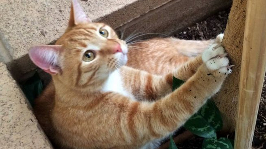 Cross-country traveling cat found years after going missing