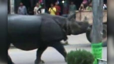 At least one woman killed before Nepalese police chased rhinoceros back into national park