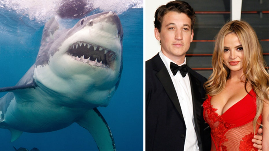 Wait, who saved whom from a shark?
