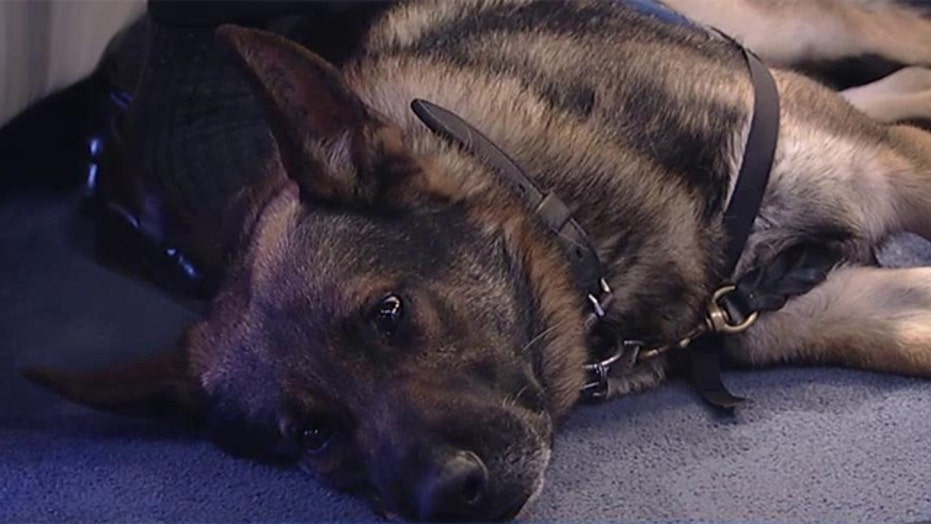 Vets hope amendment will allow for adoption of military dogs
