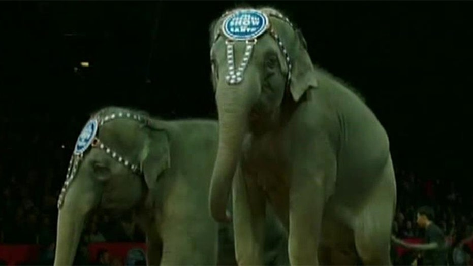 Ringling Brothers Circus to retire its famous show elephants