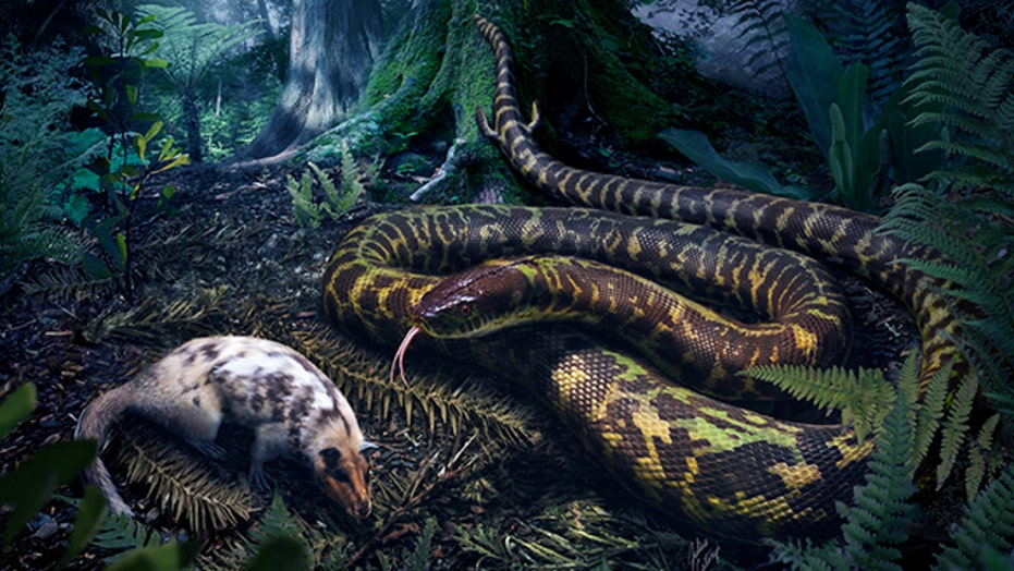 This is what the snake ancestor looked like