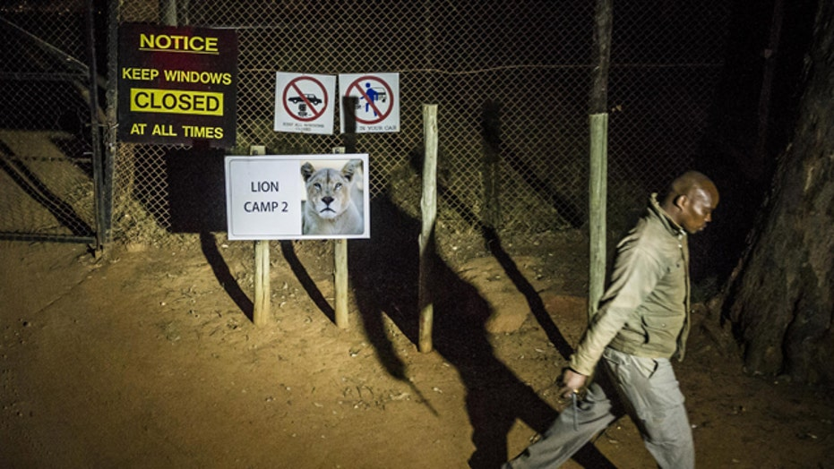 Park remains open despite fatal lion attack on American