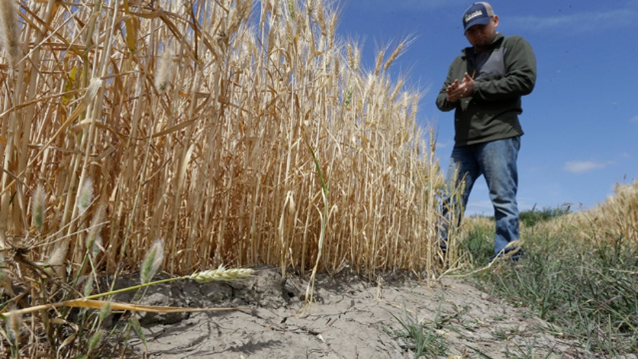 California cutting back on water use amid historic drought