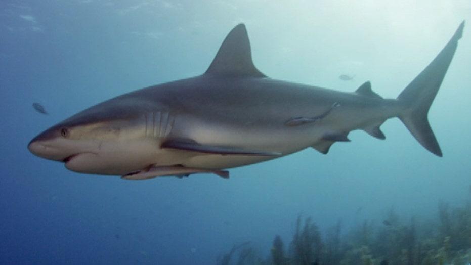 Shark Week heads to Cuba