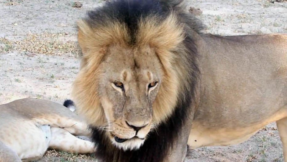 Minnesota dentist admits to killing Cecil the lion