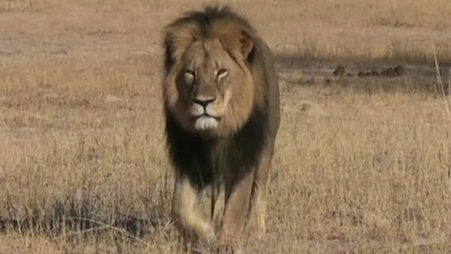 Who is at fault for the killing of Cecil the lion?
