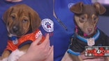 FourFour: Puppy Bowl puppies join panel to talk animal news of the week