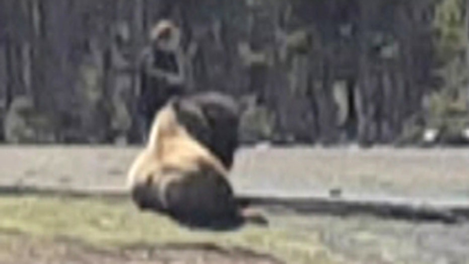MOST WATCHED: Shocked park visitors watch woman pet bison
