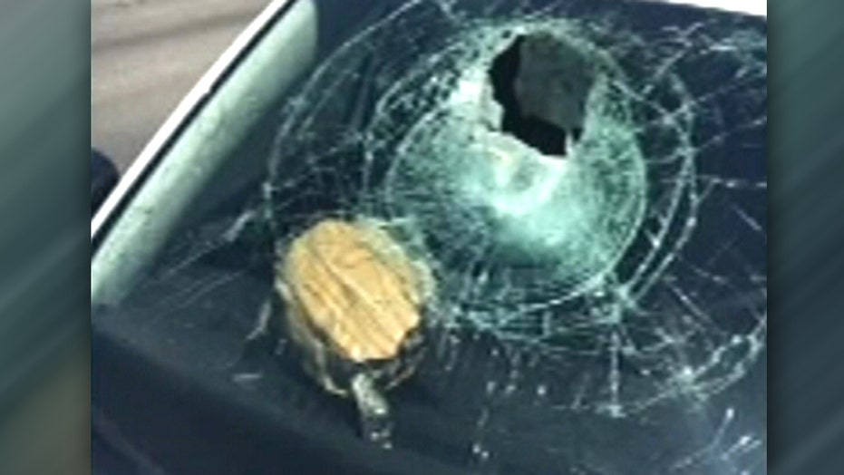Turtle crashes through driver's windshield on highway