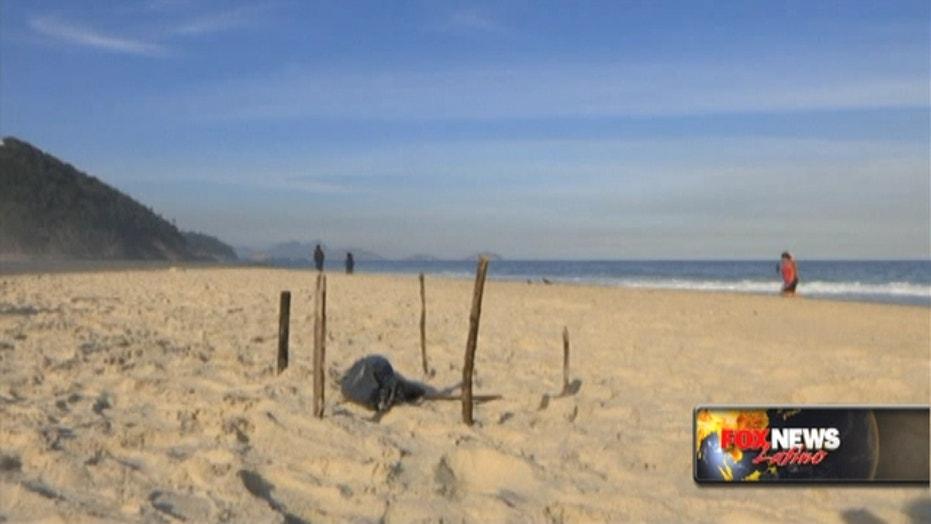 Body parts found near Olympic venue in Rio