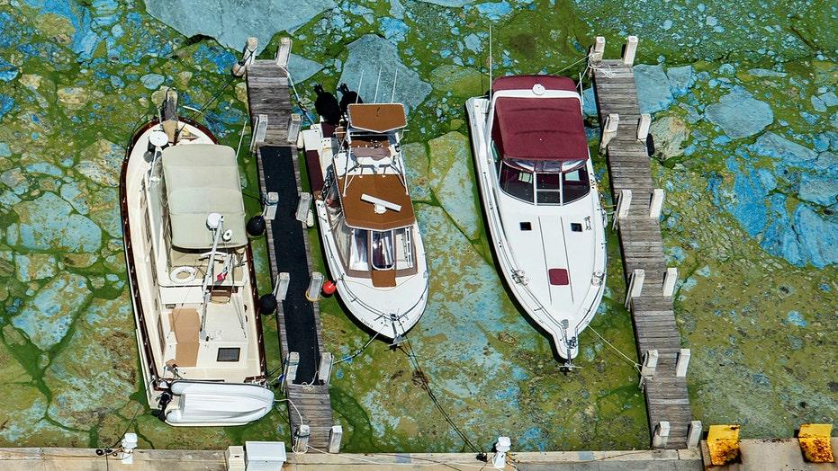 Florida's gov. declares state of emergency over toxic algae