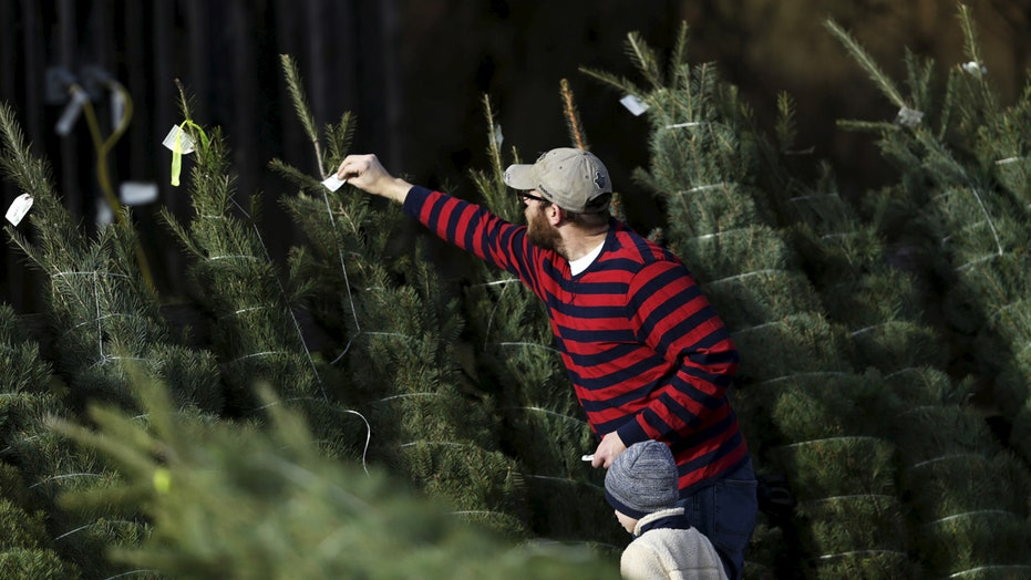 Bah humbug! Christmas tree prices on the rise