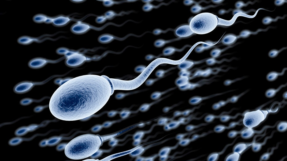 Device Lets Men Check Sperm Count At Home Fox News