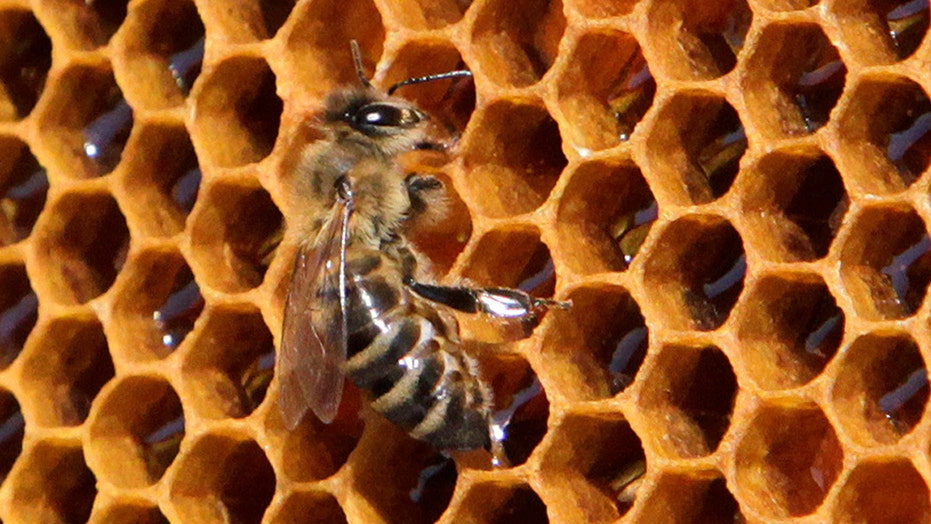 Loss of the honey bee could mean trouble for some crops