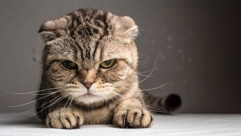 Crazy cat people? life expectancy fail, breast cancer killer