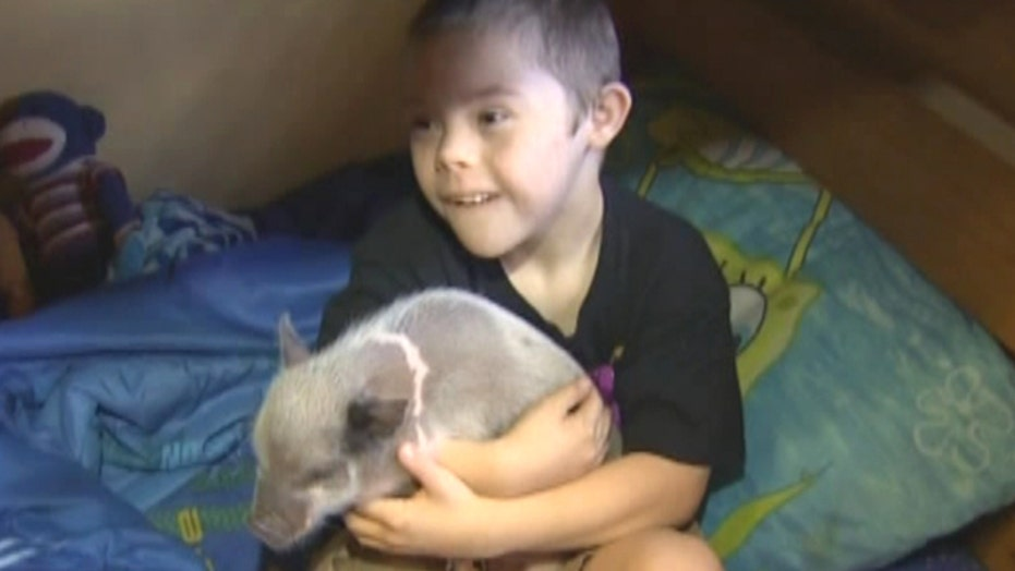 Pig prescription for boy with Down syndrome