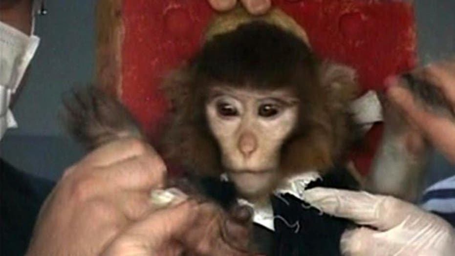 Did Iran successfully launch monkey into space?