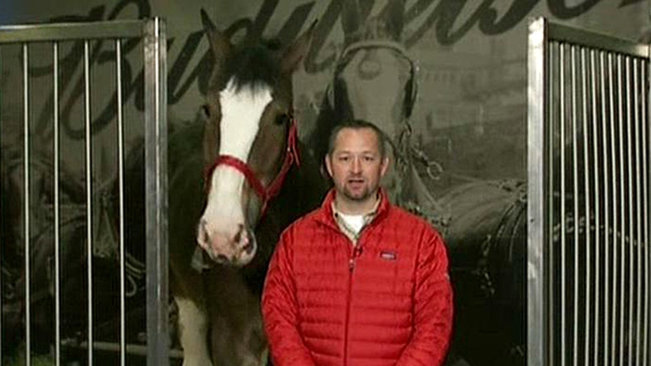Exclusive: Budweiser announces name of Clydesdale