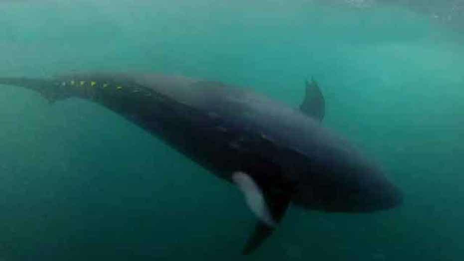 'Wicked Tuna' makes big splash