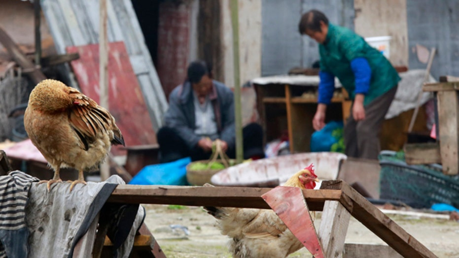 Bird flu kills in China: Should US be concerned?