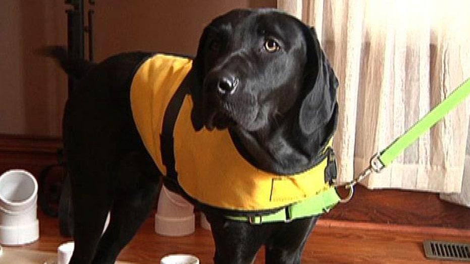 Diabetes-sniffing dog