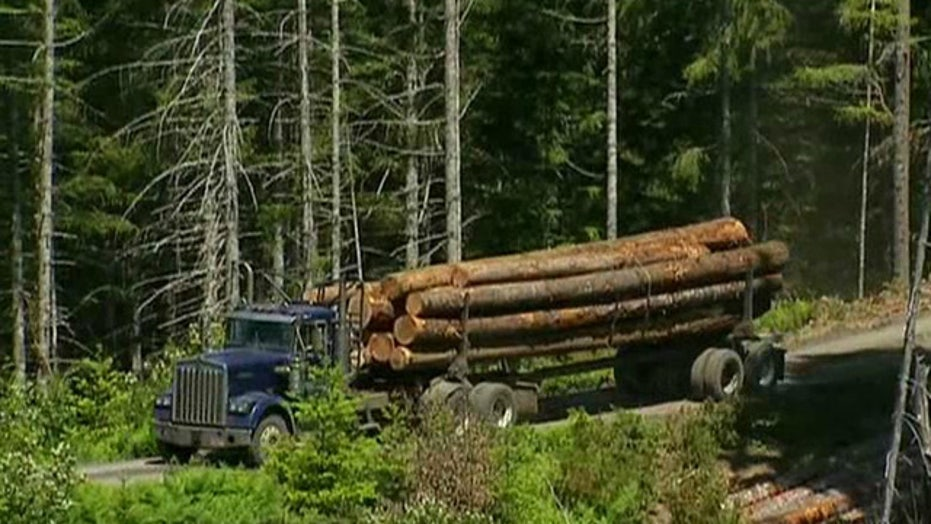 Logging communities preparing for life after the dole