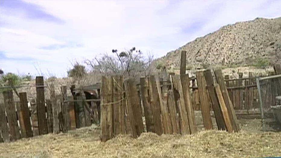 Bulls killed, property damaged during standoff at NV ranch