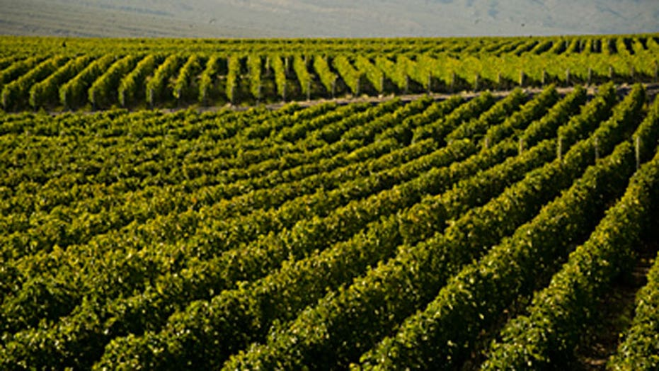 The wine women of Sicily