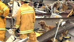 Animals from St. Louis assist rescue and recovery efforts