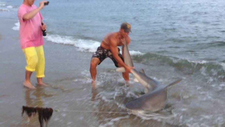 Fisherman Wrestles Shark On Mass. Beach