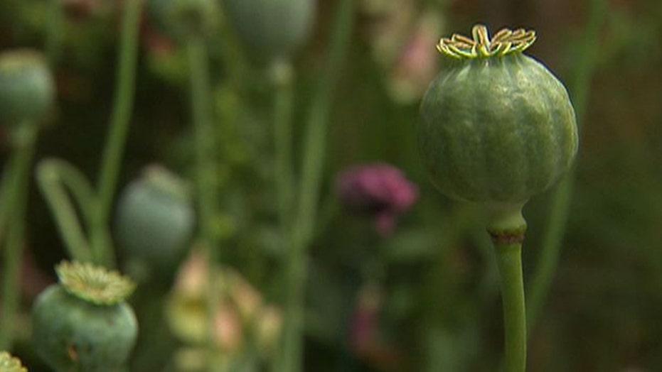 Healing power of opium