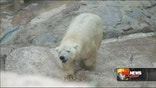 Argentina's last captive polar bear will remain in the country despite a petition by more than a half million people asking that it be moved to Canada.