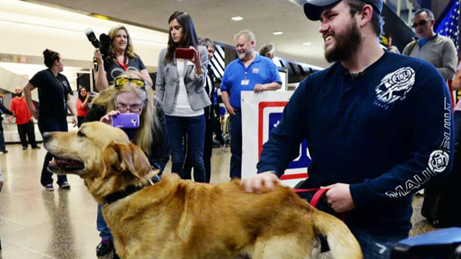 Deployed dogs reunited with their military handlers