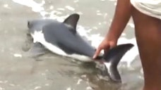 San Francisco woman braves -foot waves to lead juvenile salmon shark back into water