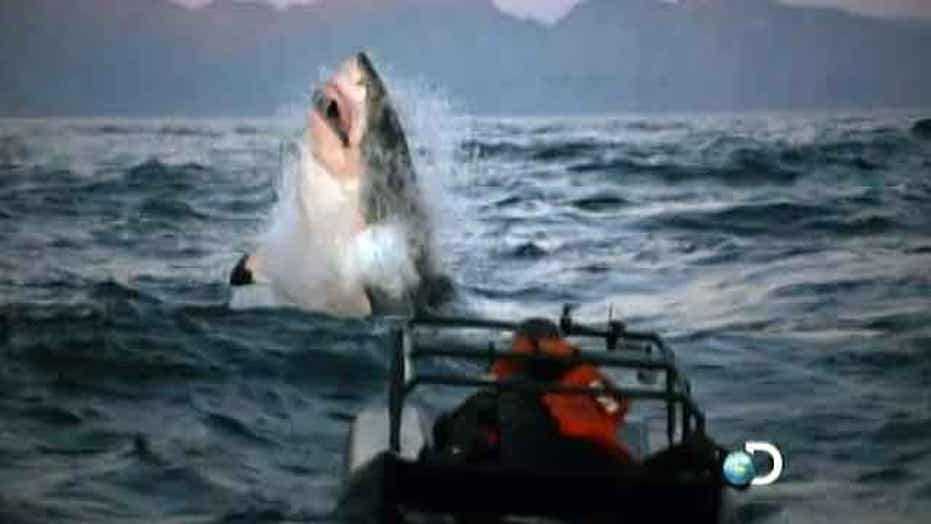 Is same shark responsible for deadly attacks off California?