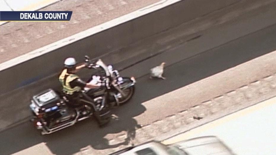 Police Escorts Chicken To Safety