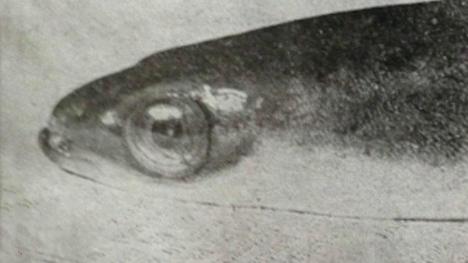 World's oldest eel dies at 155