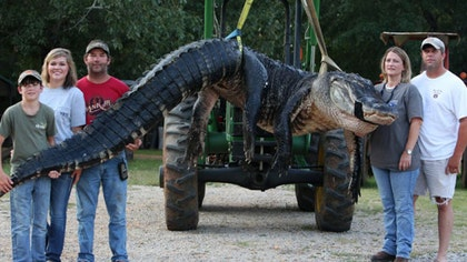Group of hunters capture massive reptile during state's alligator hunting season
