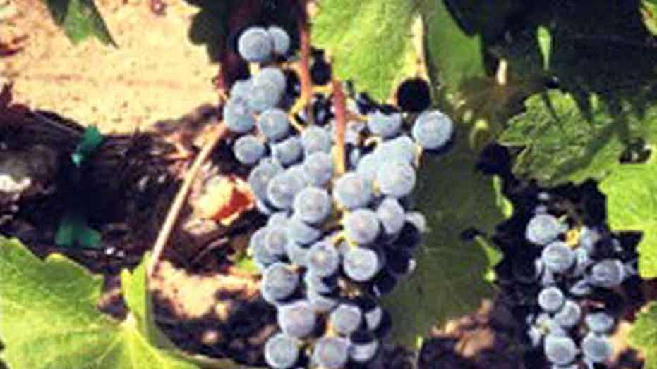 Famed Latour buys top Napa vines