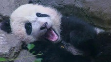 Power Player of the Week: National Zoo's baby panda