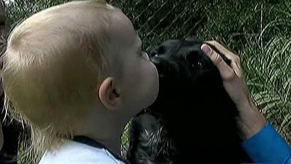 Family dog alerts parents to abusive babysitter