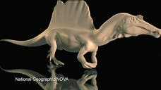 Researchers: Spinosaurus was first known semiaquatic dinosaur