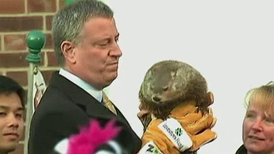 Groundhog dropped by NYC Mayor de Blasio died a week later